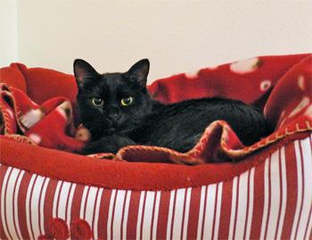 棚の上の、赤いベッド
