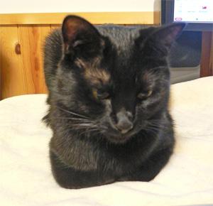 目の前に香箱猫。