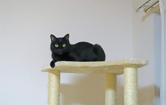 猫タワーの頂上~♪