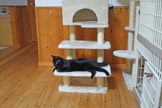まずは猫タワー階段
