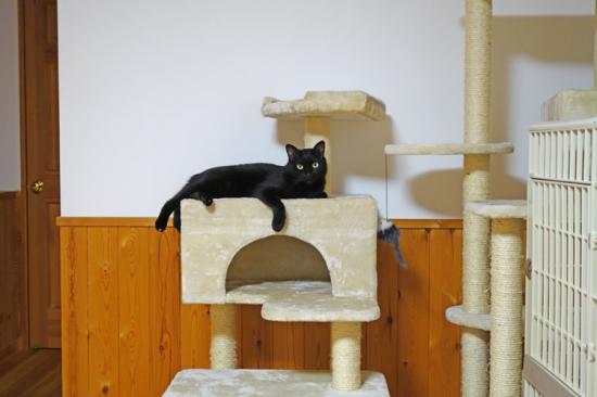 猫タワーでくつろぐこころ01