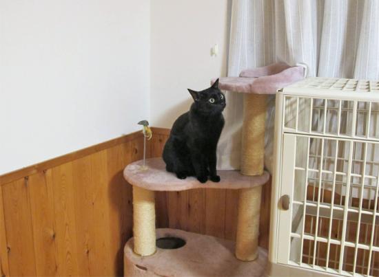 猫タワーとこころ