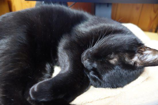 寝てるようで、ゴロゴロ喉ならしてる