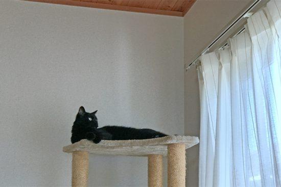 猫タワーの頂上