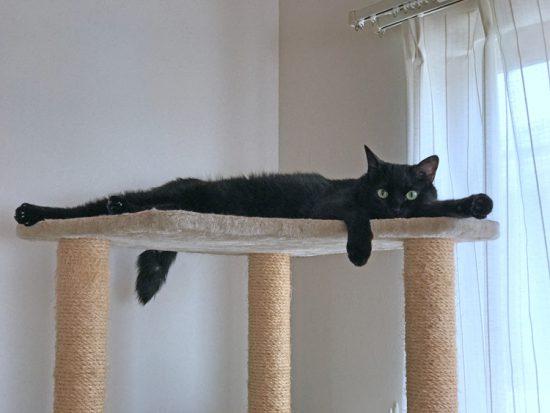 猫タワー(高)の頂で長い